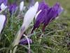 Mhm, pomlad je tudi tukaj, kao :)