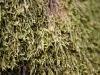 Drevesni ljubavni tepih