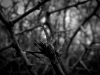 Thorn(ed)