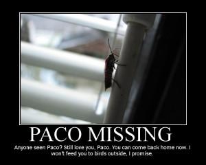 Paco vrni se